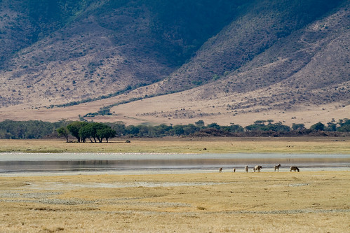 Zebras at Lake Magadi | by Stig Nygaard