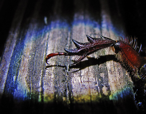 night claw | by al-ien