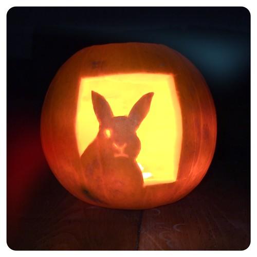 disapproving rabbit pumpkin vickie flickr