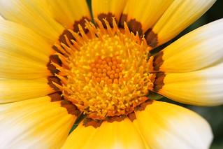 Flower Macro Taken At Robin S Flowerpot A Great