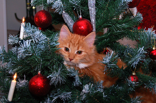 Cat in a christmas tree | by HeidiS.