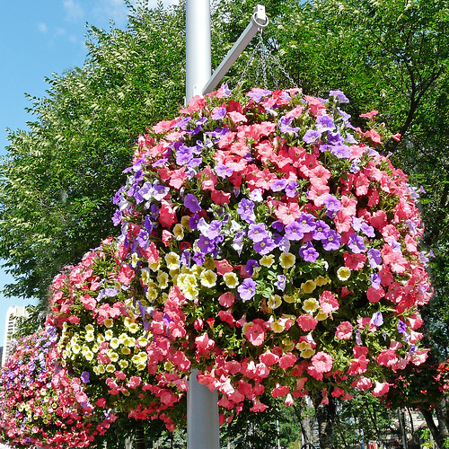 Hanging Flower Baskets Calgary : Hanging baskets flickr photo sharing