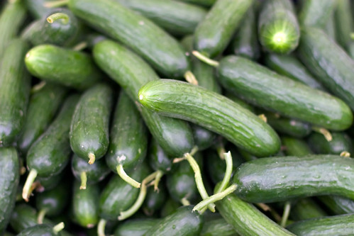 Persian Cucumbers | by clayirving
