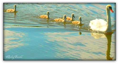 ** Follow the Leader ** | by Anything Beautiful