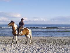A girl on a horse