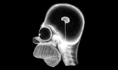 Cool Blog Sociale - 15 July 2008 - Homer Simpson's head through X-ray | by SOCIALisBETTER