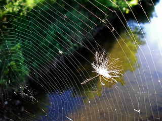Web | by Blue Lotus