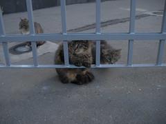 Kazan Cathedral - Russian kitties