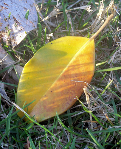 nice colored leaf.jpg | by Jo Naylor