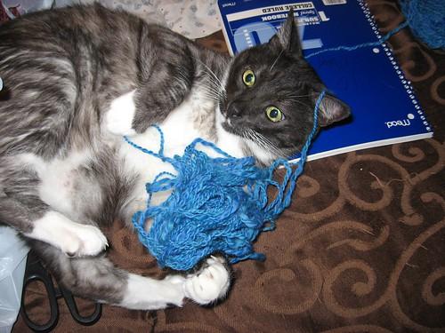 wallop yarn