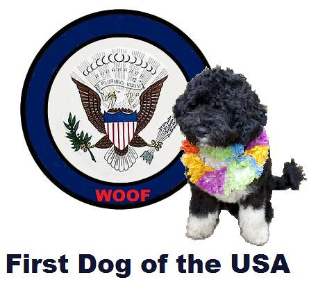 Biden Insults President's Dog! | by Mike Licht, NotionsCapital.com