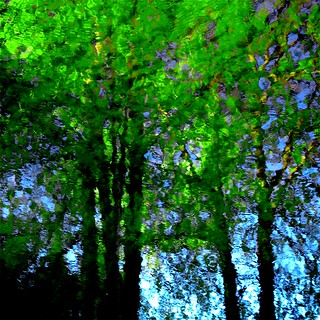 Green reflection...!!! | by Denis Collette...!!!