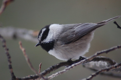 mt.chickadee | by katnor1