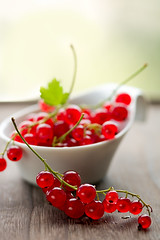 Red currant | by sarsmis