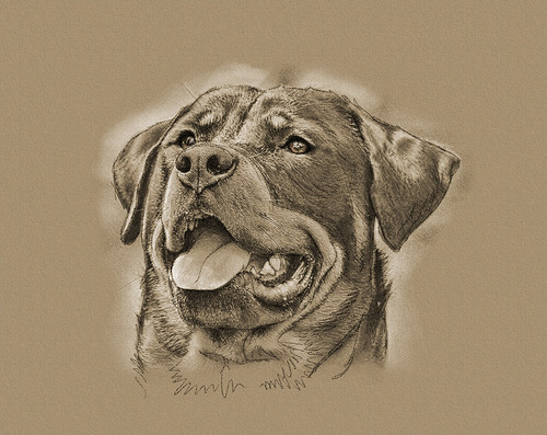 Rottie | by Zuzu7