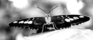 butterfly 2 | by wsquared photography & creative