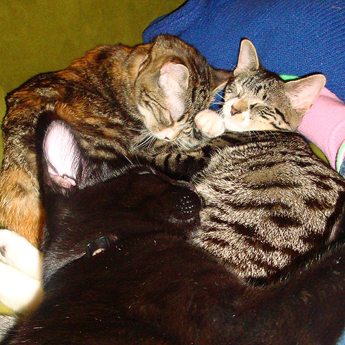 Kitten cuddle party