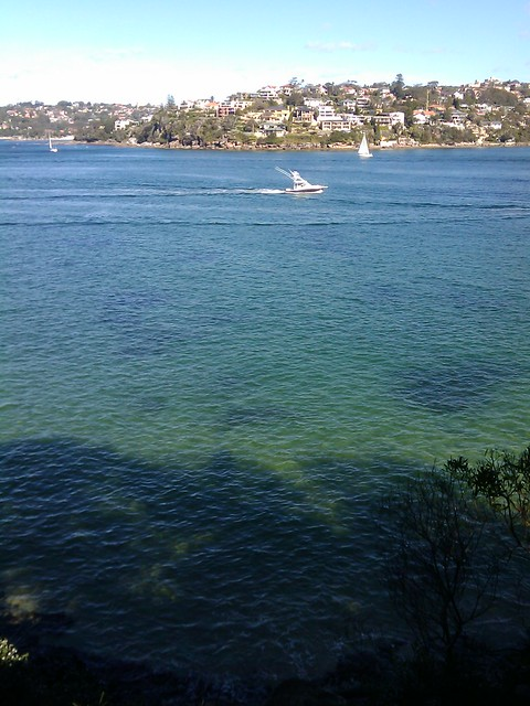 Manly to Spit Bridge Walk