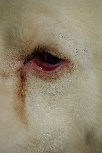 Dogs Eye - Picos de Europa | by The Hungry Cyclist