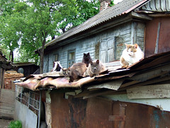 Cats from Belarus