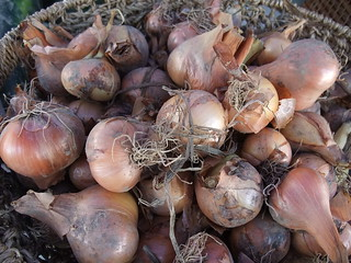 Shallots from Wayward Seed Farm | by swampkitty