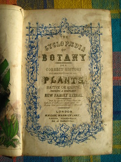 New Cyclopaedia of Botany and Complete Book of Herbs, vol. I (1854) | by threezeds