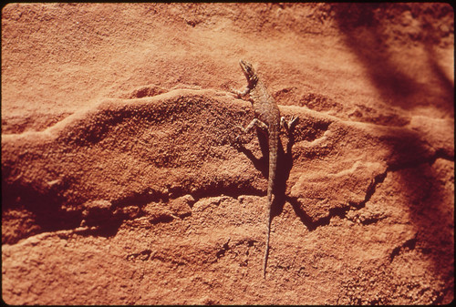 Lizard, 05/1972 | by The U.S. National Archives