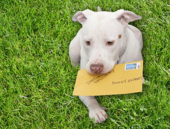 White Puppy Dog Kahuna Luna has a job, First Class Special Delivery Doggy Express Mail Delivery | by Beverly & Pack
