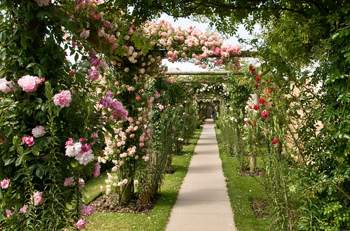 Rose Arbour | by Blondie's Highlights