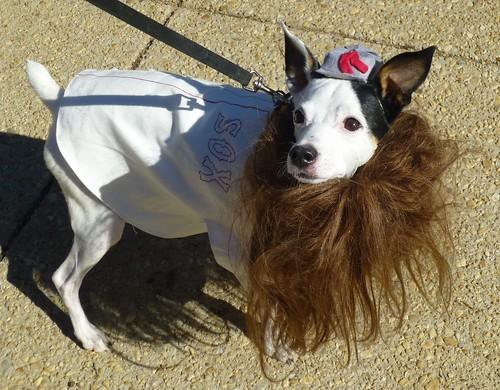 Free Dog Washington Dc