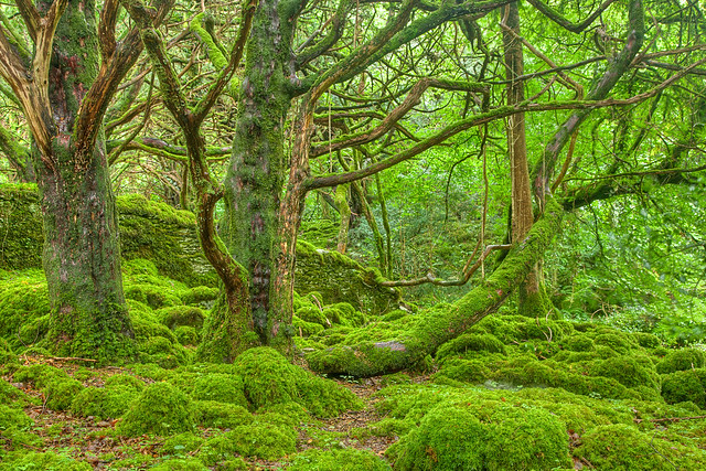 Emerald Forest - HDR