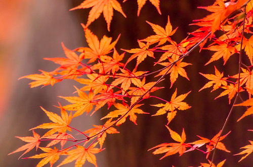 紅葉狩り - 龍野公園  03