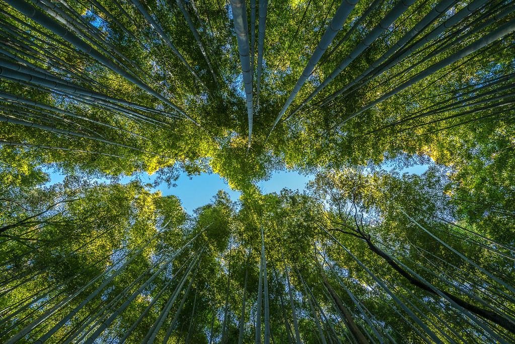 Sagano Bamboo Groove