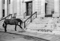 Horse outside Cardiff crown court