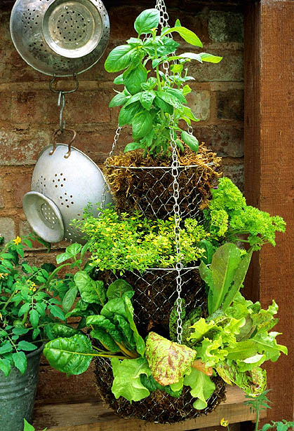 Recycled Hanging Herb Basket