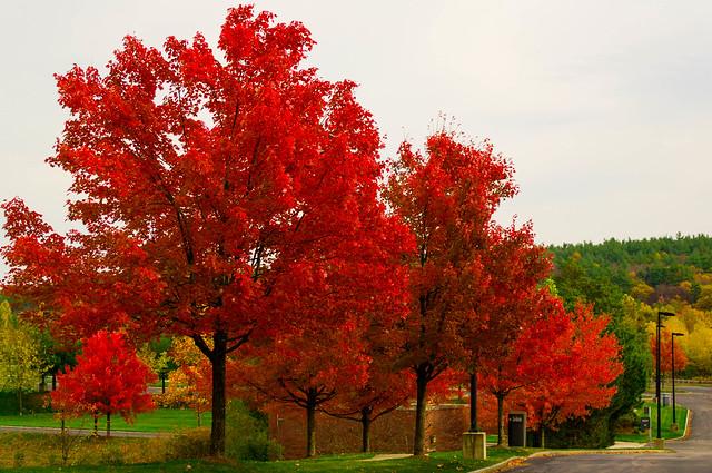 imagem do outono nos EUA