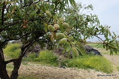 Garrucha - Casa rural tahal ...
