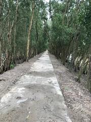 Rừng Trà sư, An Giang. Photo by Trach.