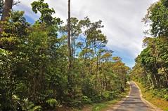 road to Kawah Putih