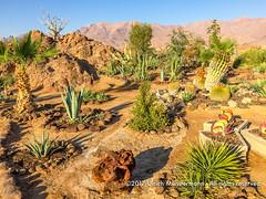 The beautiful garden of Brandberg White Lady Lodge, Namibia
