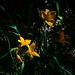 Auckland Botanic Gardens-9