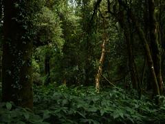 forest, Doi Inthanon