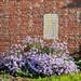 Chartwell - Garden Wall