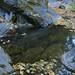 Smith Creek still had many deep pools