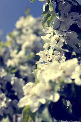 Floral_002 | by Pierre Pocs