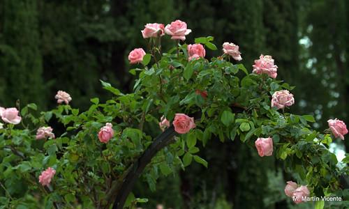 Jardines de aranjuez patos rosas y otras flores manuel - Jardines con rosas ...