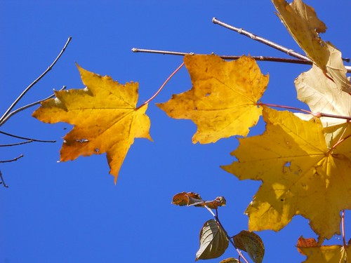 Baar Switzerland  City new picture : Switzerland, Baar: Blue me yellow | The time of the year whe ...