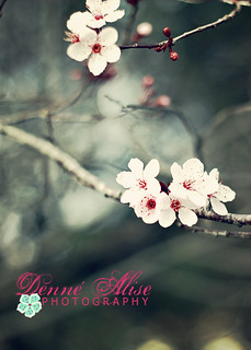 Sign of Spring {explored} | by Denné Alise Photography