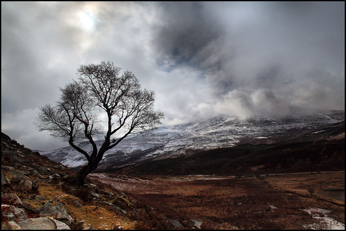 Tree and snow clouds on Schiehallion | by angus clyne