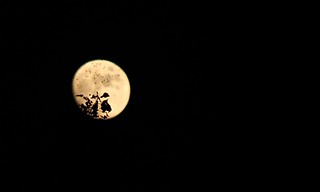Bugs silhouetted against the moon | by Shiny Dewdrop